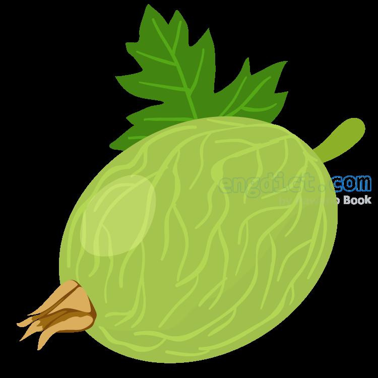 gooseberry แปลว่า กูซเบอร์รี่