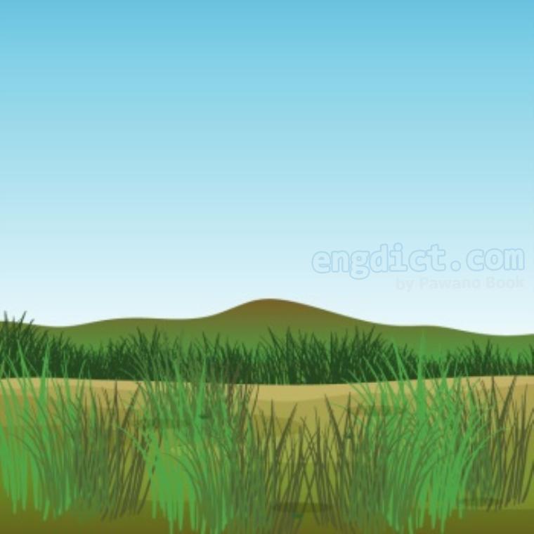 grass แปลว่า หญ้า