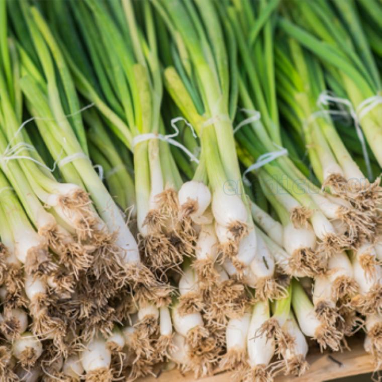 green  onion แปลว่า ต้นหอม