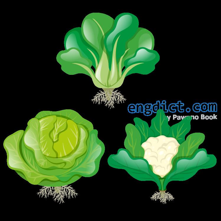 greenery แปลว่า พืชผักที่มีสีเขียวสด