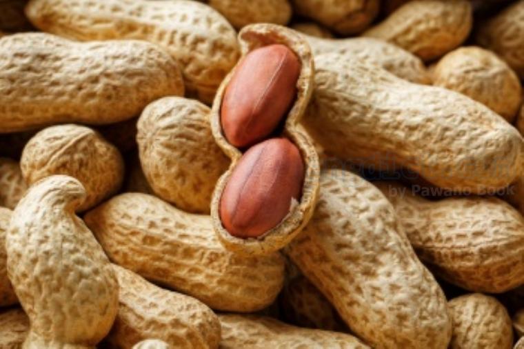 ground nut แปลว่า ถั่วลิสง