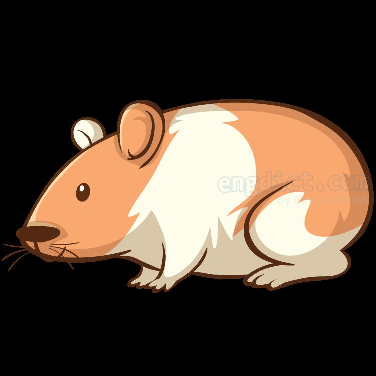 hamster แปลว่า หนูแฮมสเทอร์