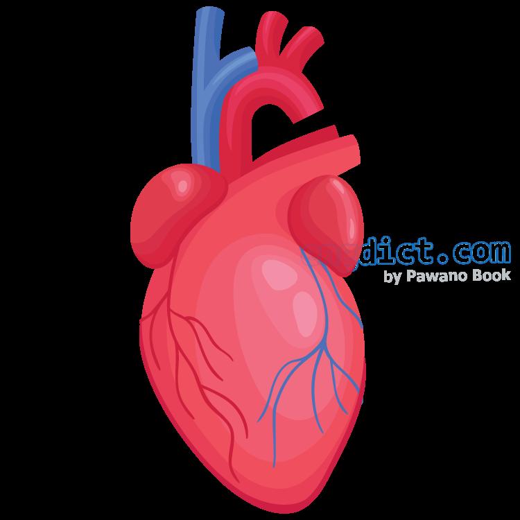 heart แปลว่า หัวใจ