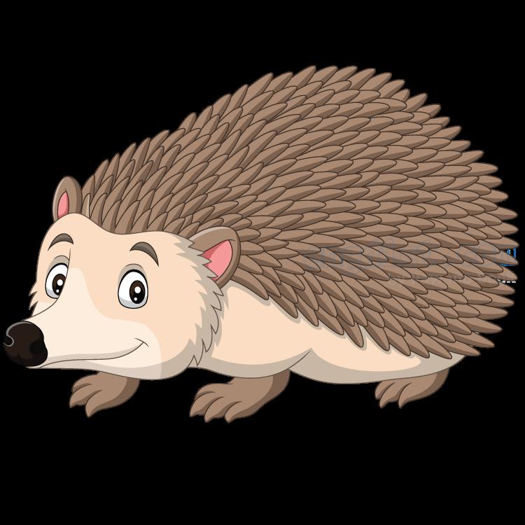 hedgehog แปลว่า เม่น