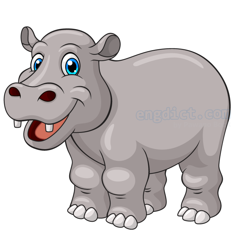 hippo แปลว่า ฮิปโปโปเตมัส