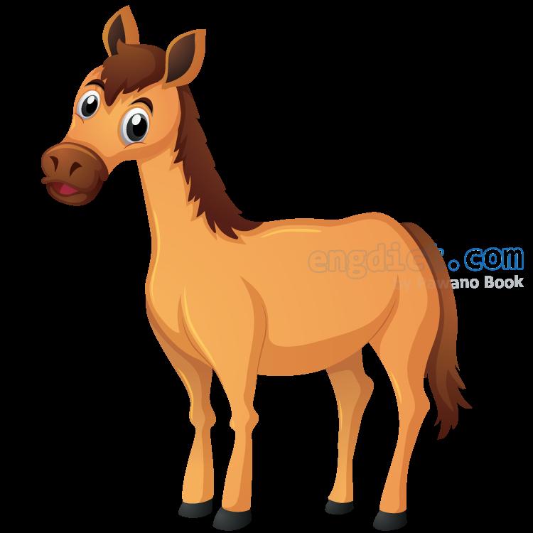 horse แปลว่า ม้า