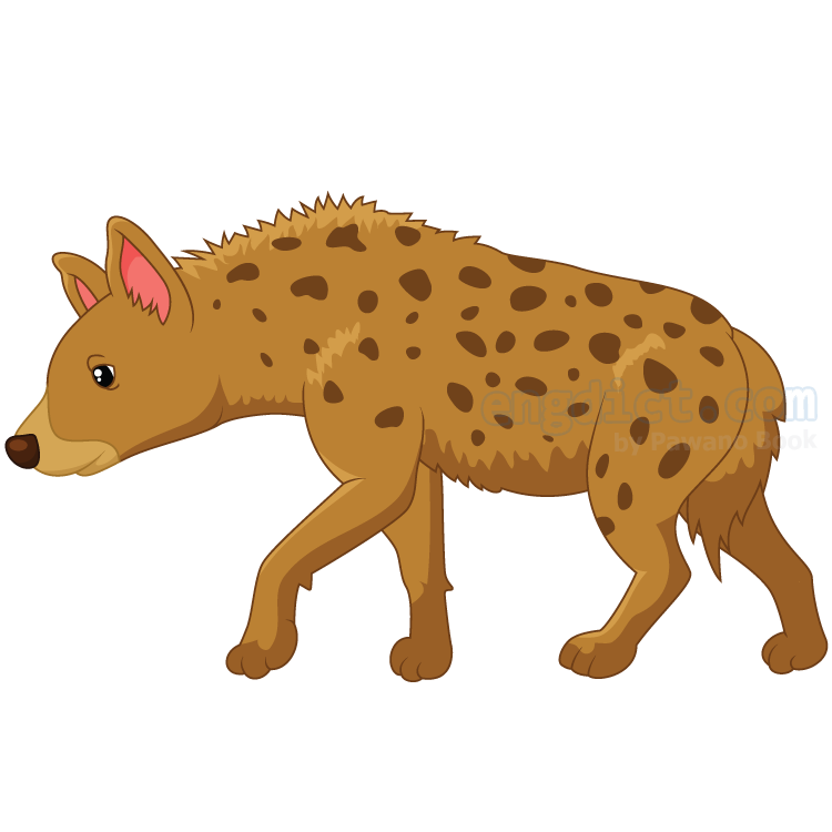 hyena แปลว่า หมาใน