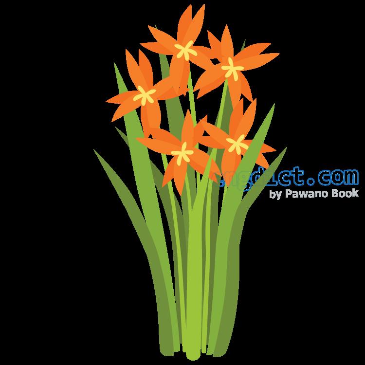 inflorescence แปลว่า ช่อของดอกไม้