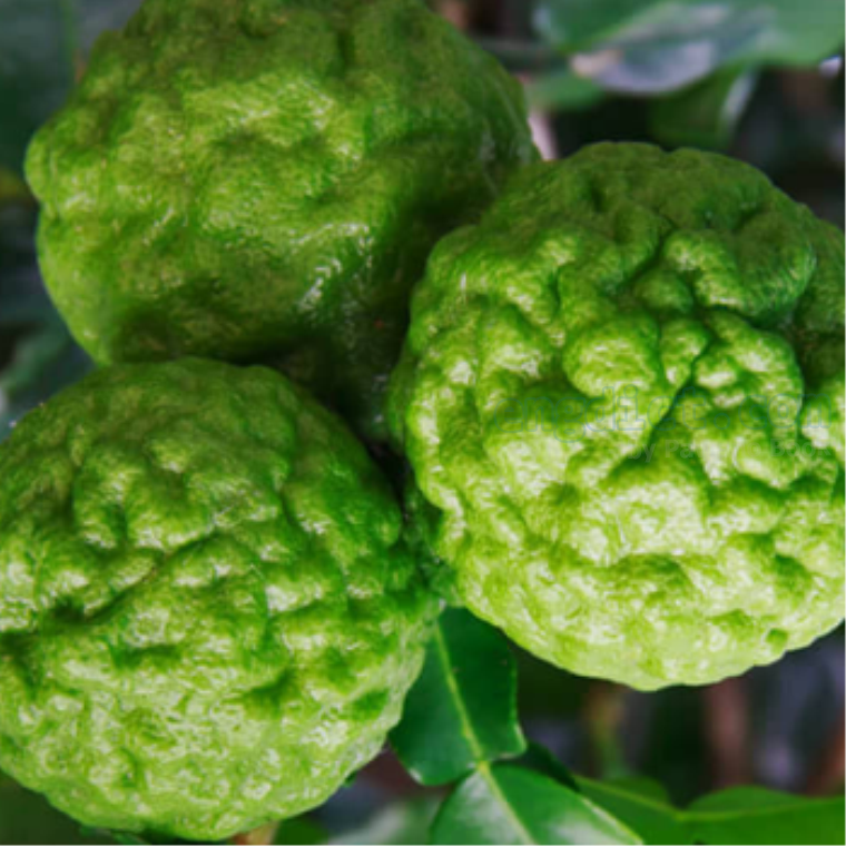 kaffir lime แปลว่า มะกรูด