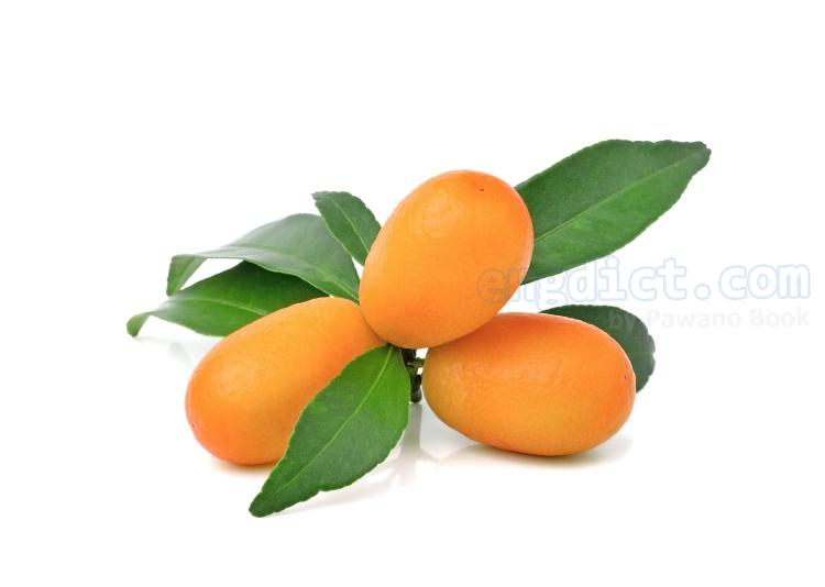 kumquat แปลว่า ส้มจี๊ด