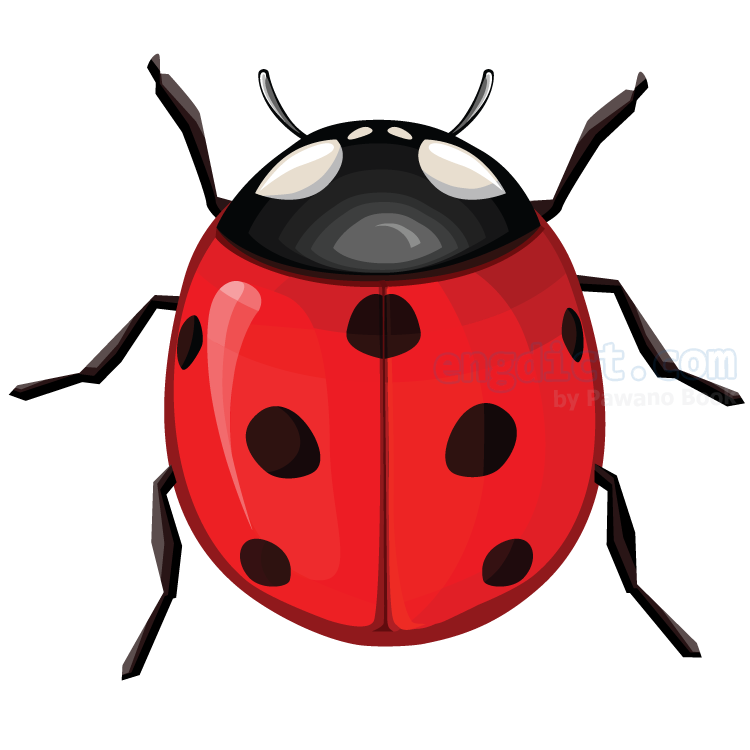 ladybug แปลว่า แมลงเต่าทอง