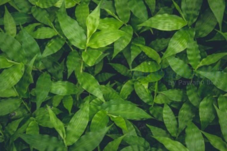 leaf แปลว่า ใบไม้,กลีบดอกไม้