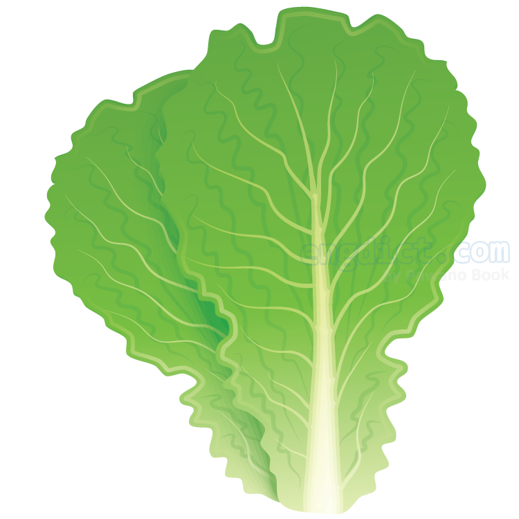 lettuce แปลว่า ผักกาดหอม