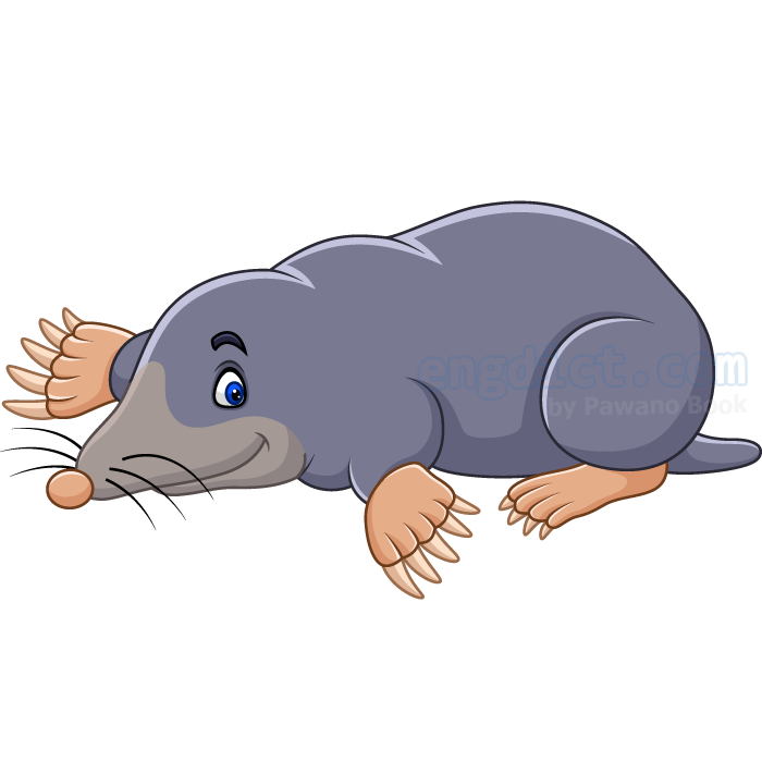 mole แปลว่า ตัวตุ่น