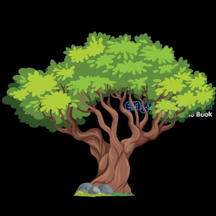 oak แปลว่า ต้นโอ๊ก