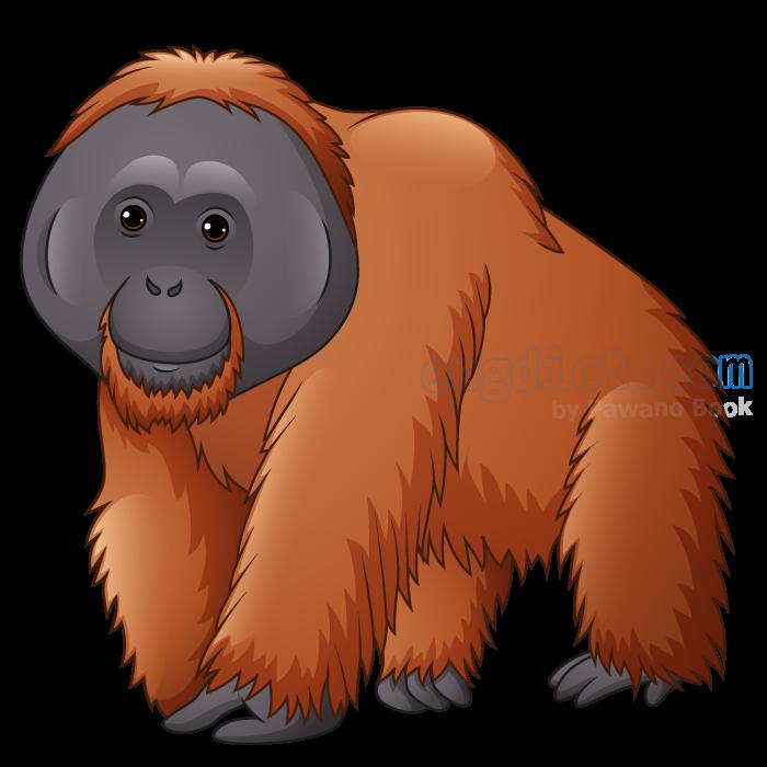 orangutan แปลว่า ลิงอุรังอุตัง