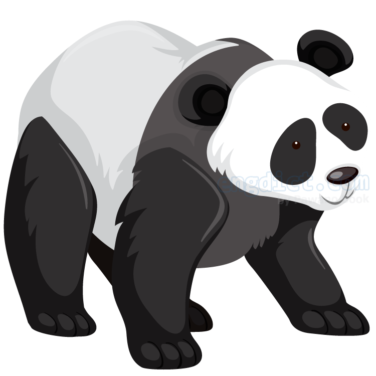 panda แปลว่า หมีแพนด้า