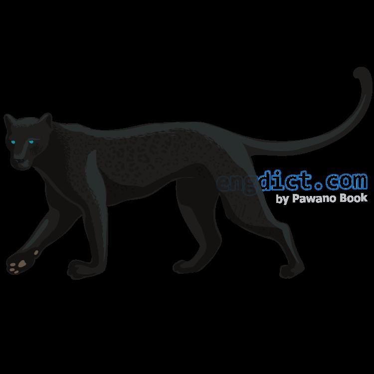panther แปลว่า เสือดำ