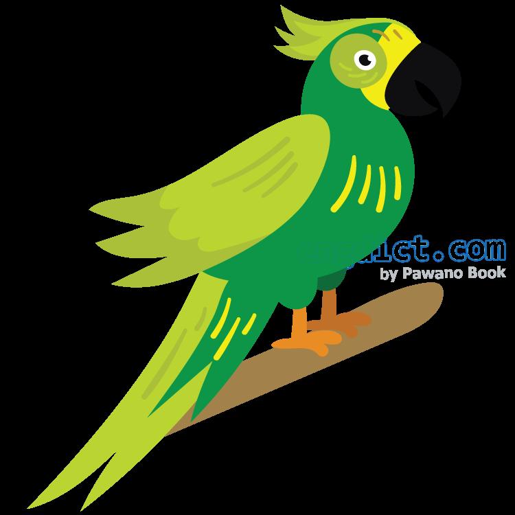 parrot แปลว่า นกแก้ว