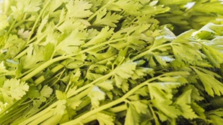 parsley แปลว่า ผักชีฝรั่ง