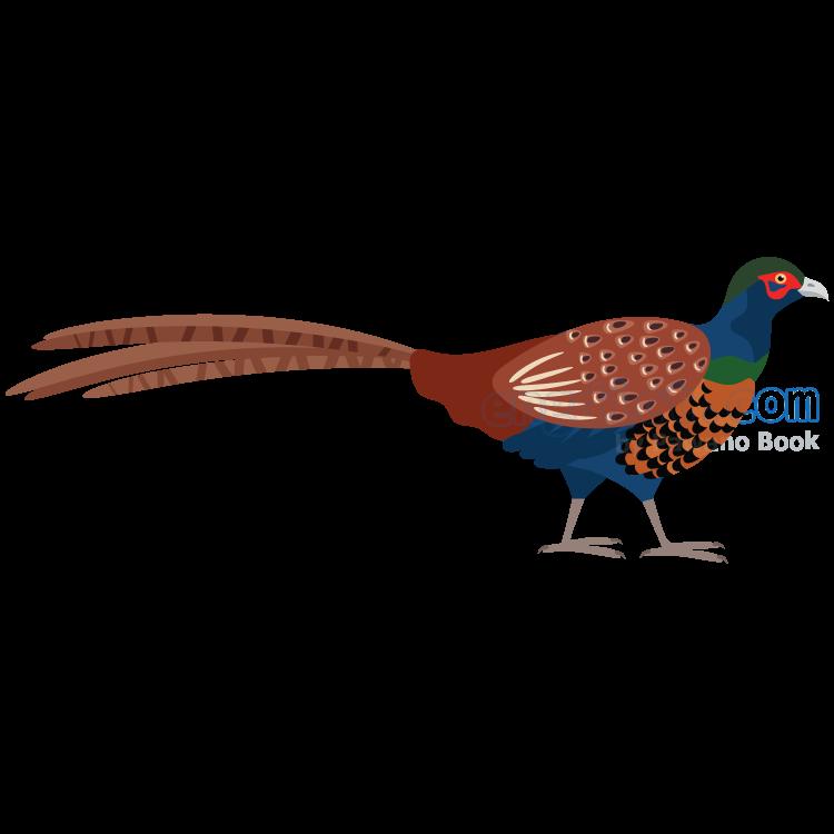 pheasant แปลว่า ไก่ฟ้า