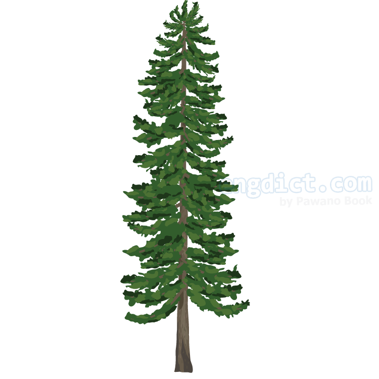 pine แปลว่า ต้นสน