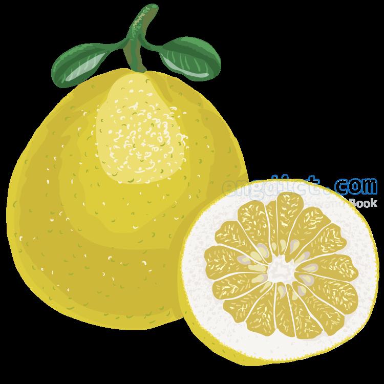 pomelo แปลว่า ส้มโอ