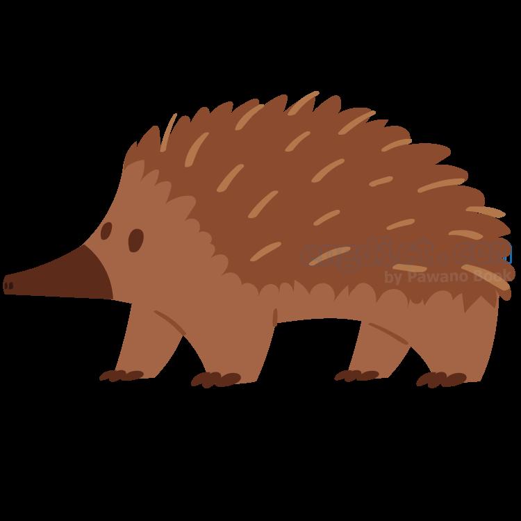 porcupine แปลว่า เม่น