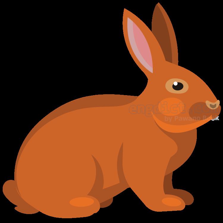 rabbit แปลว่า กระต่าย