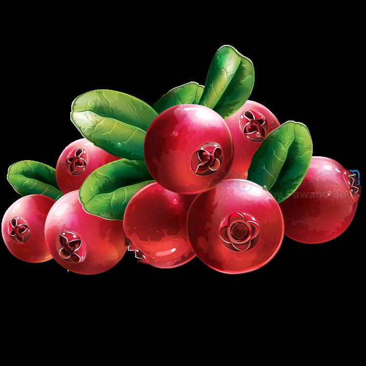 red cranberry แปลว่า เรดแครนเบอร์รี