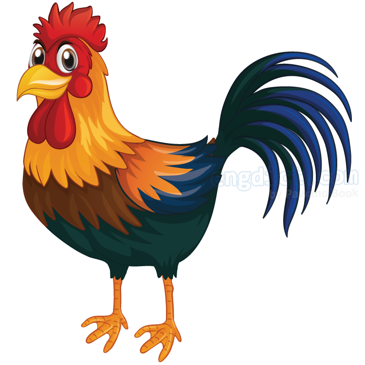 rooster แปลว่า ไก่ตัวผู้