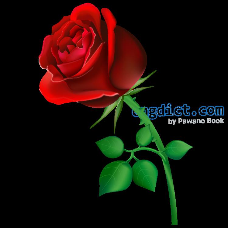 rose แปลว่า ดอกกุหลาบ