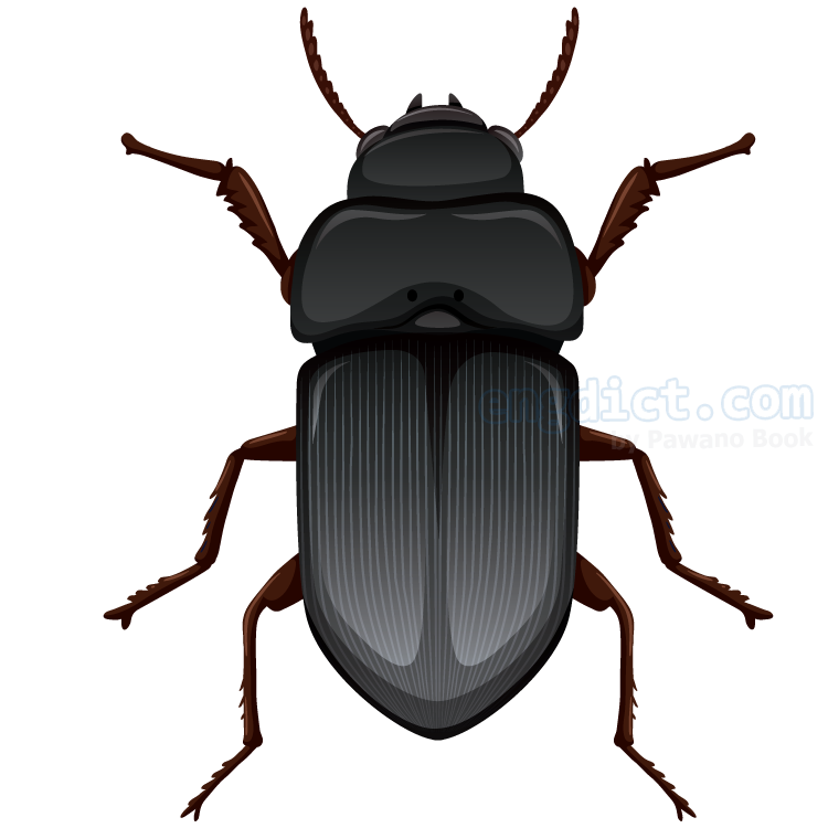 scarab แปลว่า แมลงปีกแข็ง
