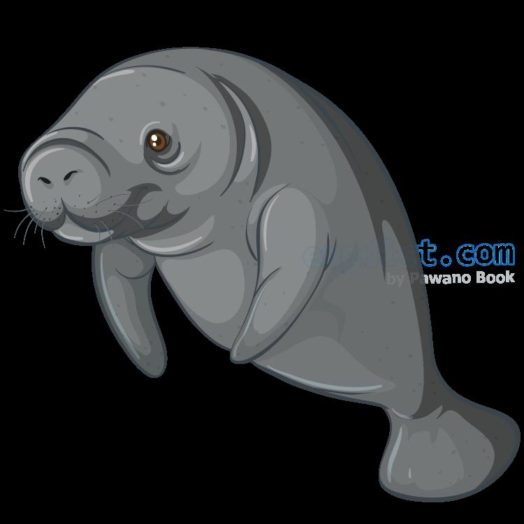 sea cow แปลว่า ตัวพะยูน