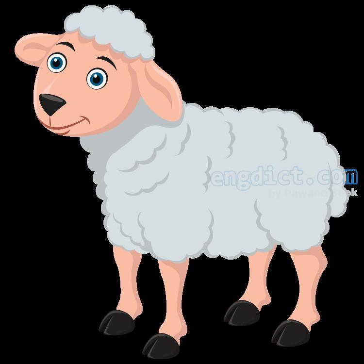 sheep แปลว่า แกะ