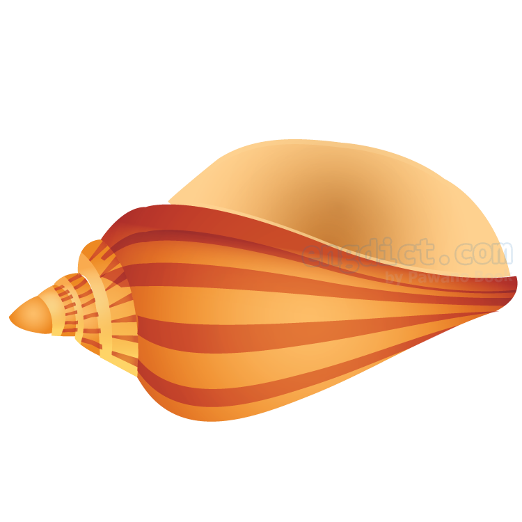 shell แปลว่า เปลือกหอย