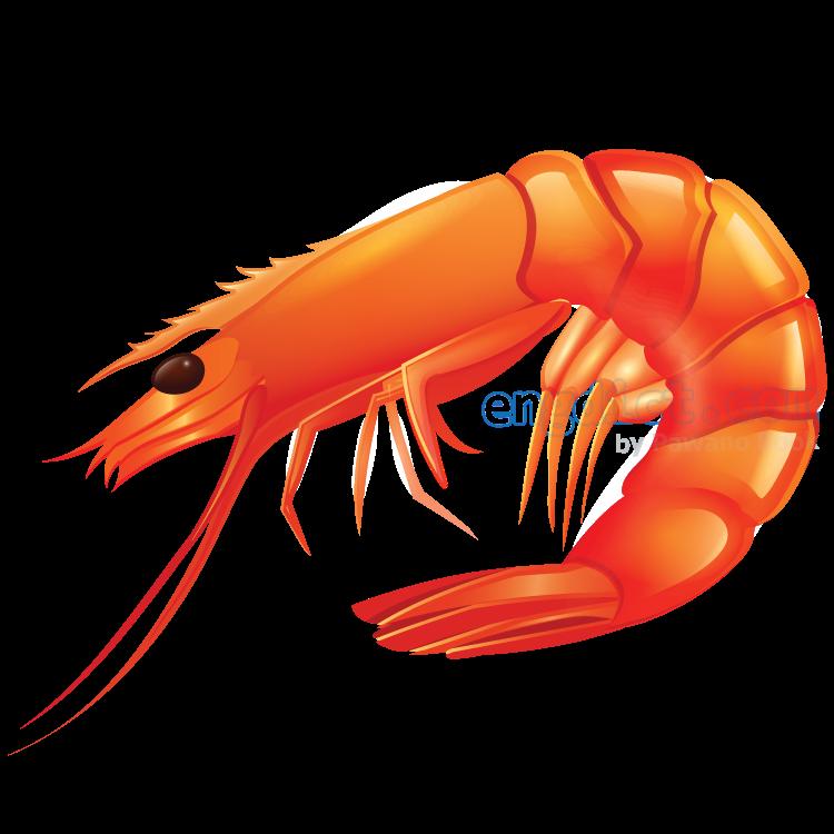 shrimp แปลว่า กุ้งขนาดเล็ก
