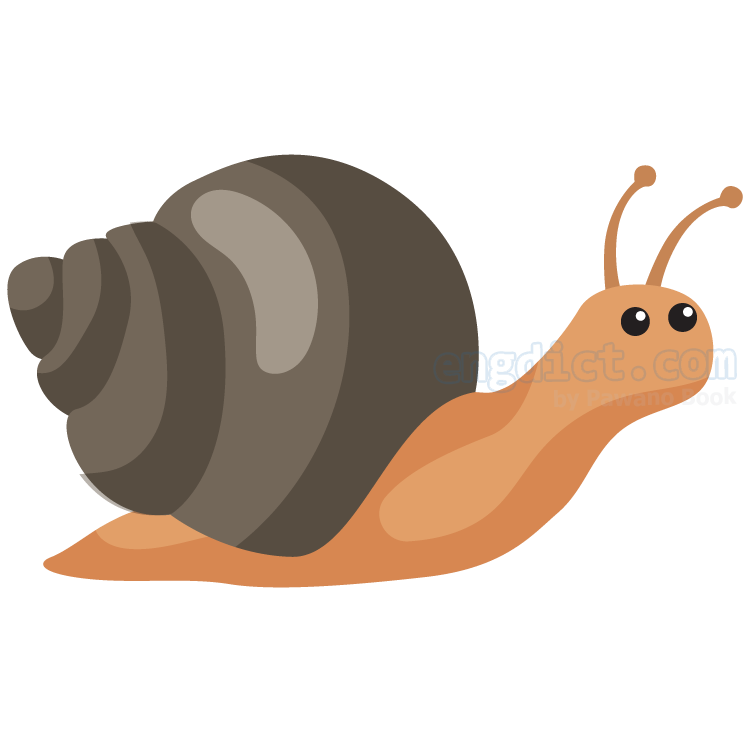 snail แปลว่า หอยทาก