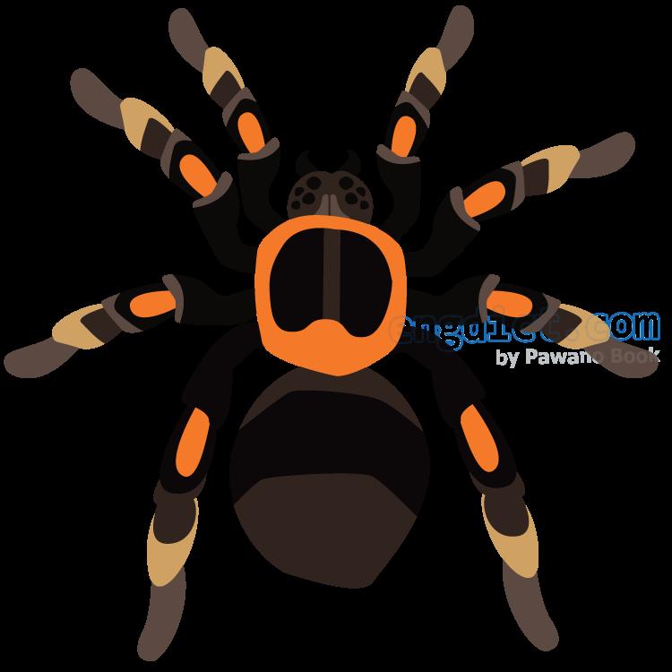 spider แปลว่า แมงมุม