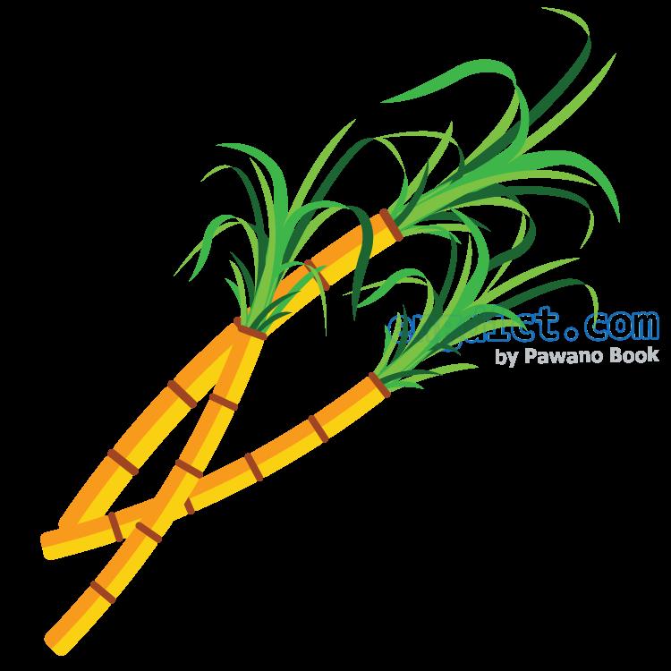 sugar cane แปลว่า ต้นอ้อย