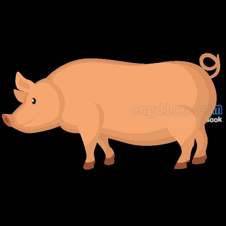 swine แปลว่า สุกร