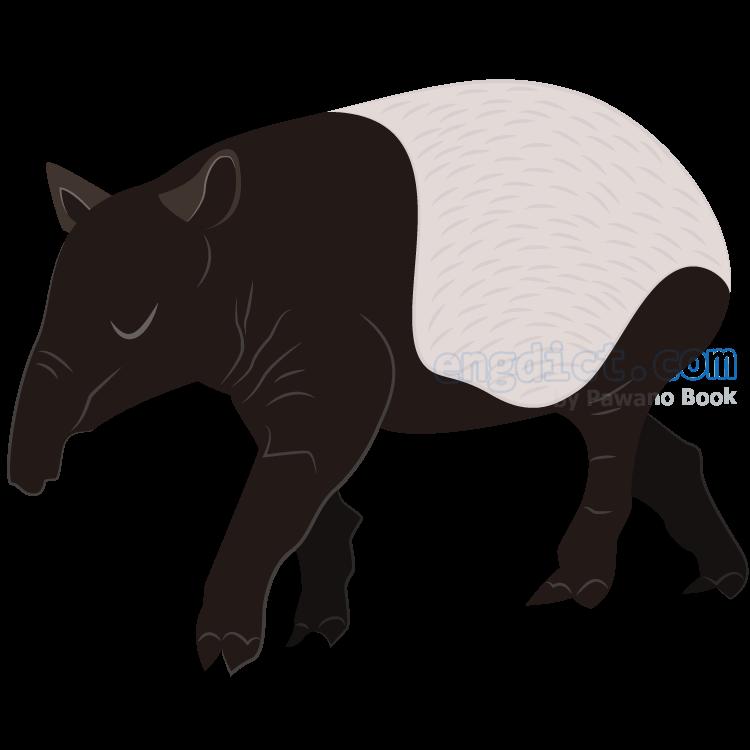 tapir แปลว่า สมเสร็จ