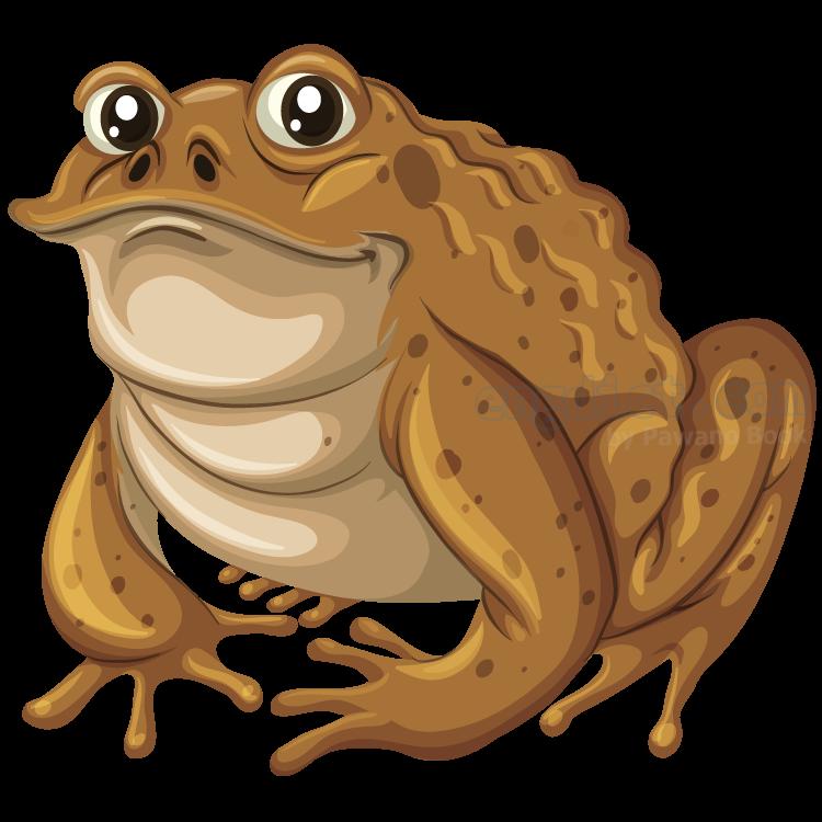 toad แปลว่า คางคก