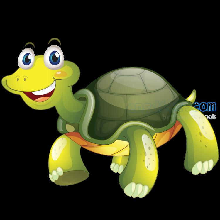 tortoise แปลว่า เต่า