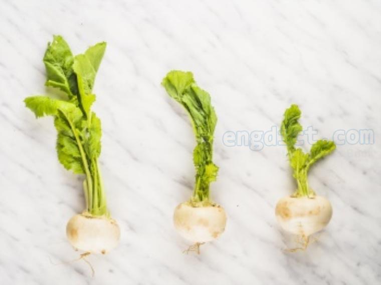 turnip แปลว่า หัวผักกาด
