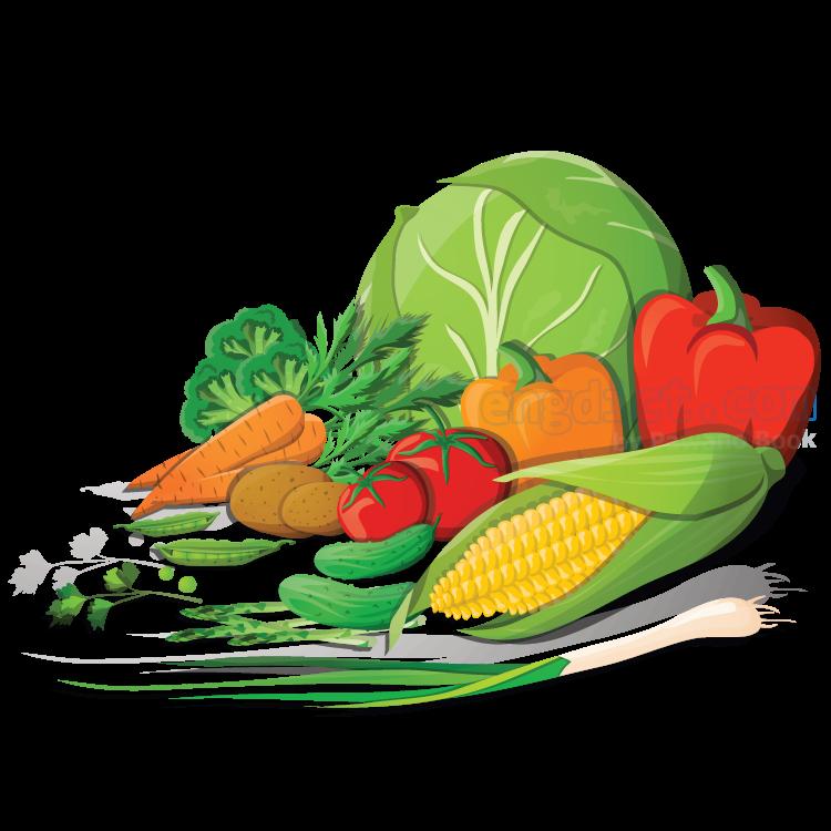 vegetable แปลว่า ผัก