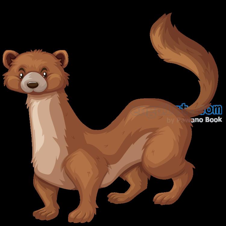 weasel แปลว่า สัตว์กินเนื้อขนาดเล็ก