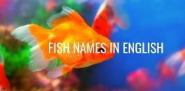คำศัพท์ภาษาอังกฤษ ชื่อเรียกปลาชนิดต่างๆ