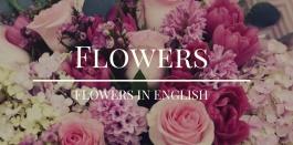 รวมคำศัพท์ภาษาอังกฤษใช้เรียกชื่อดอกไม้