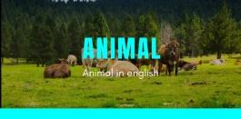 100 คำศัพท์เรียกชื่อสัตว์เป็นภาษาอังกฤษ